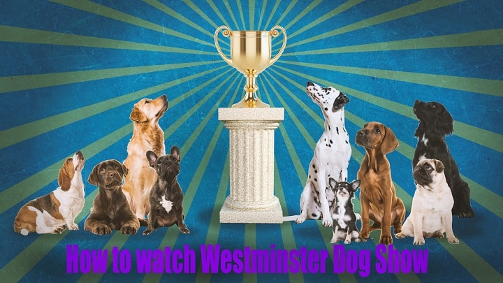 Watch Westminster Dog Show 2020.Westminster Dog Show Live Stream 2020 Free And Tv Info
