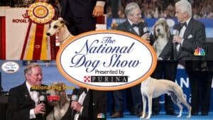 National Dog Show Live Stream