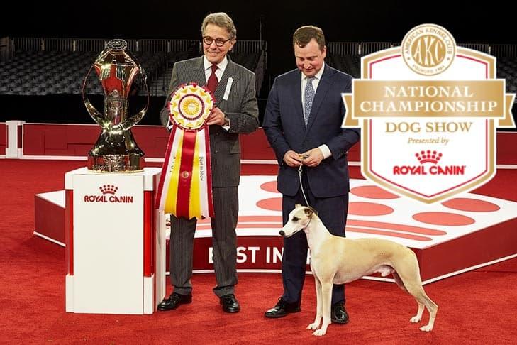 AKC-National-Championship-Dog-Show-2019-Live-Streaming
