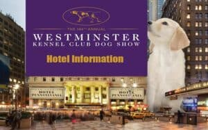 2020 Dog Show.Westminster Dog Show Live Stream 2020 Free And Tv Info