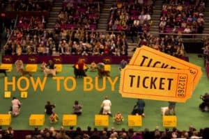 how-to-buy-ticket-dog-show