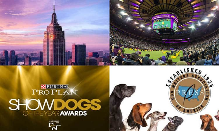Events in Westminster Dog Show 2020