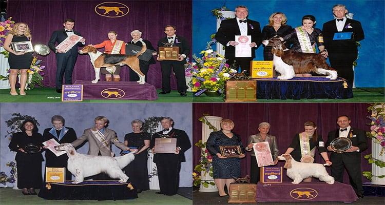 Westminster Best In Show 2021 Westminster dog show 2021 judges Details
