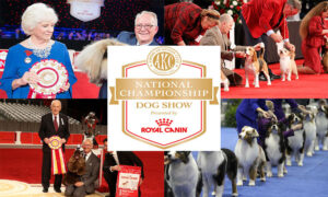 AKC National Championship Live Stream