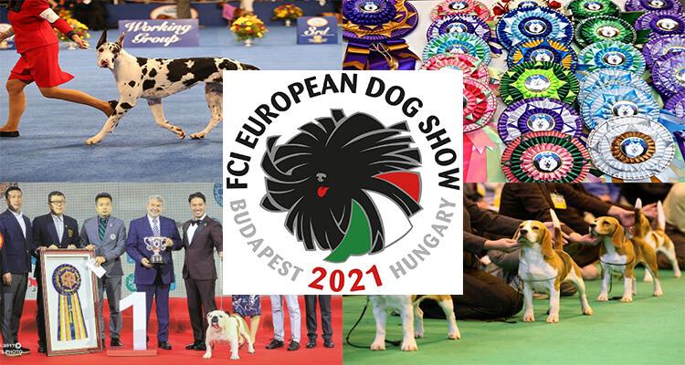 European Dog Show Live Stream